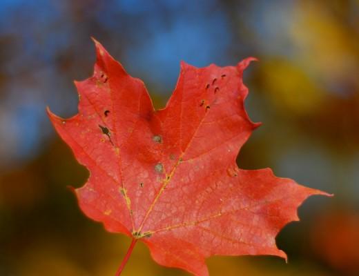Formaegusto- autunno